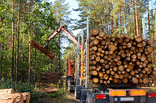Timber Production and Forestry